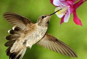 DIY Container Garden for Hummingbirds