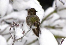 Attracting Hummingbirds in Winter