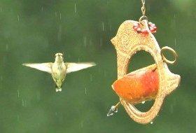 Feeding Birds with Kitchen Items