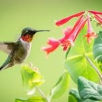 9 Expert Tips for Attracting Hummingbirds