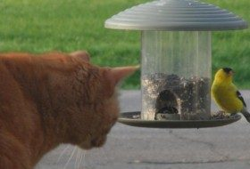 Keep Cats Indoors to Protect Wild Birds