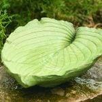 Make a DIY Concrete Leaf Birdbath