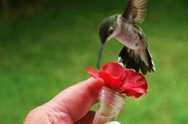 Make a Hand-Held Hummingbird Feeder