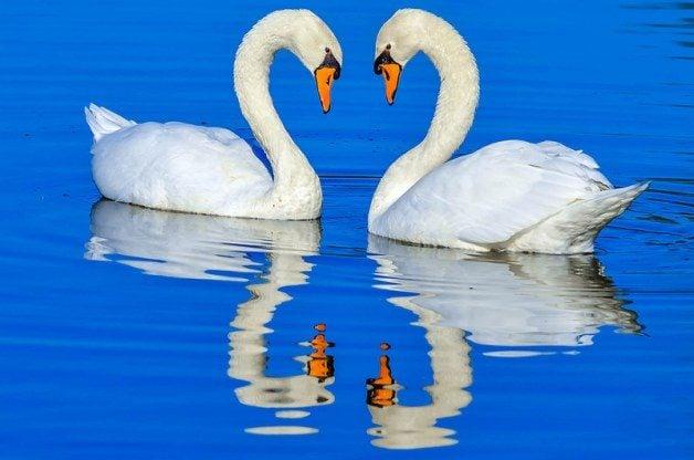 Monogamous birds