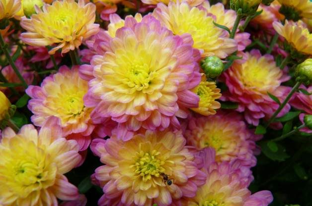 Research paper topics landscaping