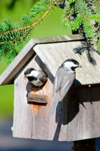 Attracting Nesting Birds With Better Birdhouses Birds And Blooms