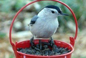 Best Birdseed to Feed Backyard Birds