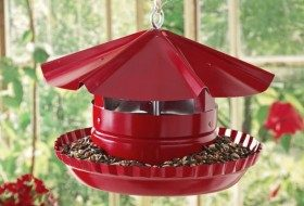 Pie Tin DIY Bird Feeder