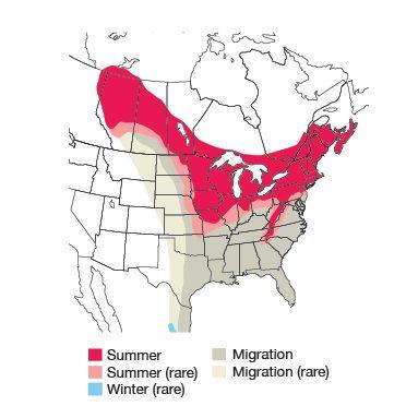 Rose-breasted Grosbeak Bird Species
