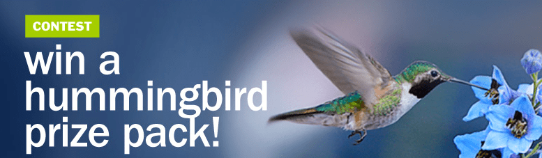 hummingbirdprize