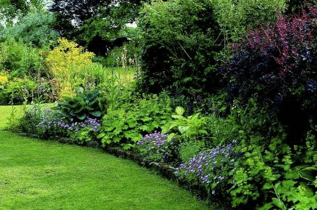 Low Light Plants Shade Annuals Shade Garden Ideas Birds Blooms - shade garden design ontario