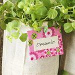 Grow a Vertical Herb Garden in a Shoe Organizer