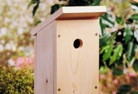 Completed Build a One-Board DIY Birdhouse