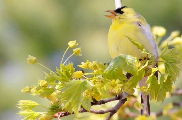 Attracting Birds | Plants that Attract Birds | Trees that ...