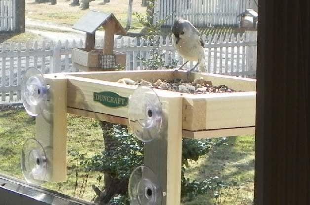 small space birding