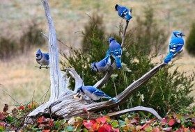America's Smartest Birds