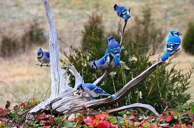 Smartest Birds