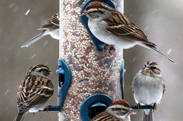 Top 10 Tips to Attract Birds to Your Feeders