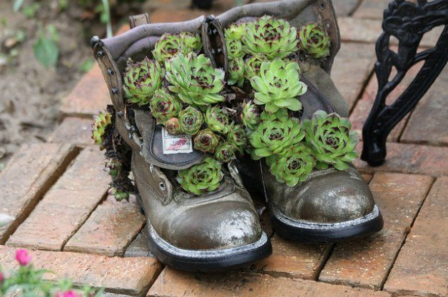 Succulents in Boots