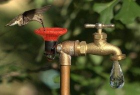 Expert Tips for Attracting Hummingbirds