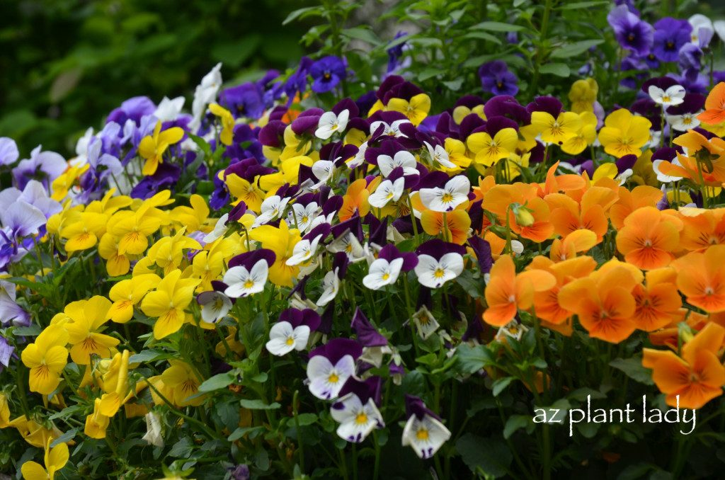 say goodbye to summer with fall blooming annuals birds
