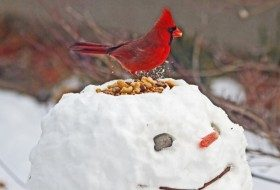 Winter Birds Myths and Facts