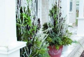 Easy Winter Container Garden Arrangement