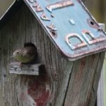 Attract Nesting Birds with Better Birdhouses