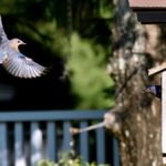 How to Make a DIY Birdhouse for Bluebirds