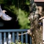How to Make a DIY Bluebird House