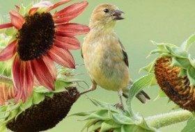 Create the Ultimate Backyard Wildlife Habitat