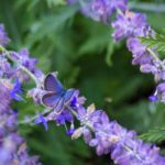 16 Long-Blooming Flowers for Attracting Butterflies and Hummingbirds