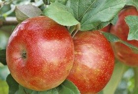 Top 10 Fruit Trees for Small Spaces