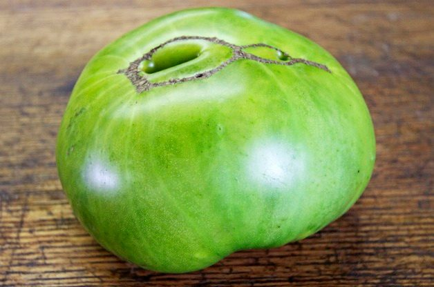 Top 10 Best Tomatoes to Grow: Aunt Ruby's German Green