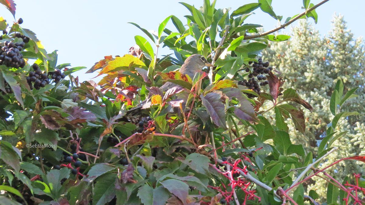 BotanicGardens-a3-CC,CO