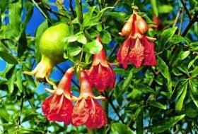 Top 10 Tropical Plants