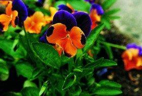 Top 10 Edible Flowering Plants