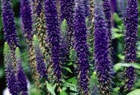 Top 10 Flowers for a Cutting Garden