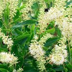 Top 10 Summer Flowering Shrubs for Full Sun