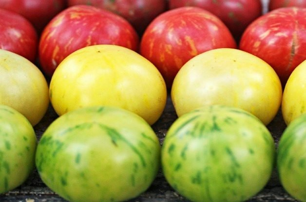 Top 10 Best Tomatoes to Grow: Vernissage