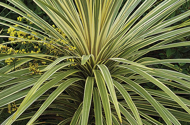 Top 10 Plants You Can't Kill: Yucca