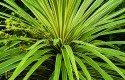 Yucca: Low Maintenance Perennial
