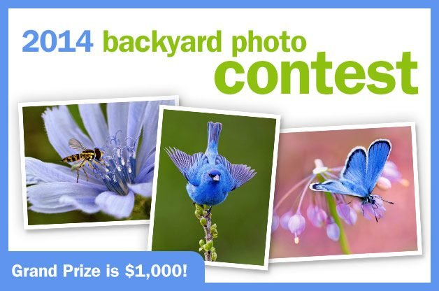 Contest closed birds and blooms