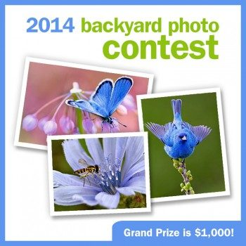 Backyard Photo Contest