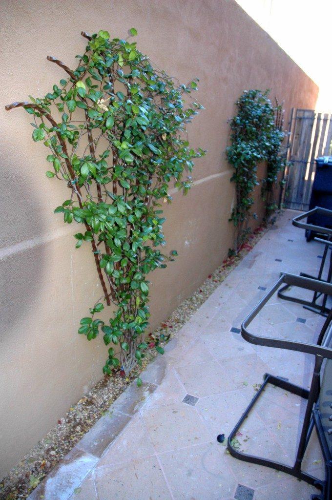 vines on rebar trellils