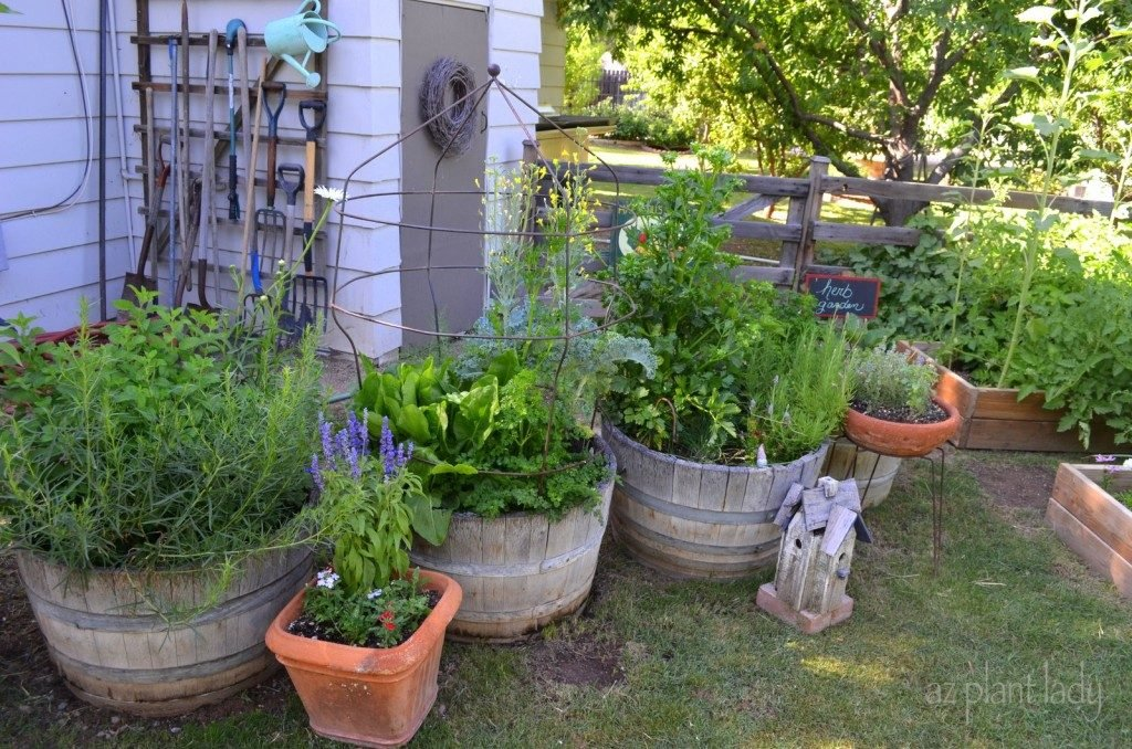 whiskey barrel containers plants