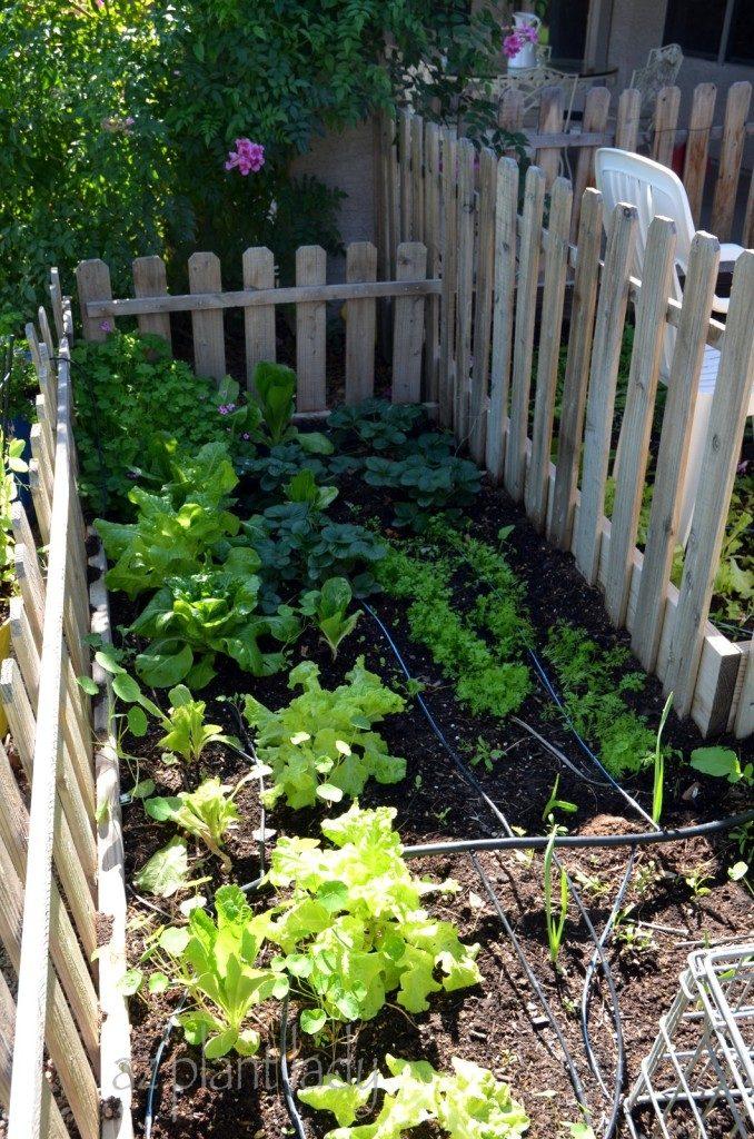 cool-season vegetable garden