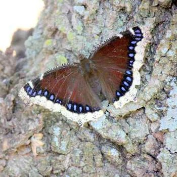 How Does a Butterfly Survive Winter?