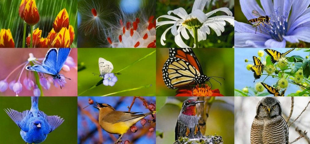 Time to Vote for the Backyard Photo Contest! - Birds and Blooms