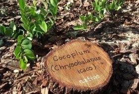 DIY Garden Signs from Tree Rounds